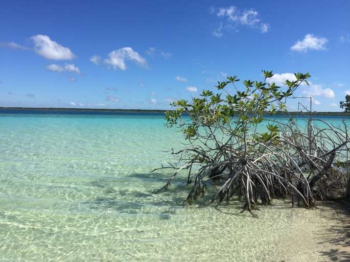 Mexico Bacalar bush