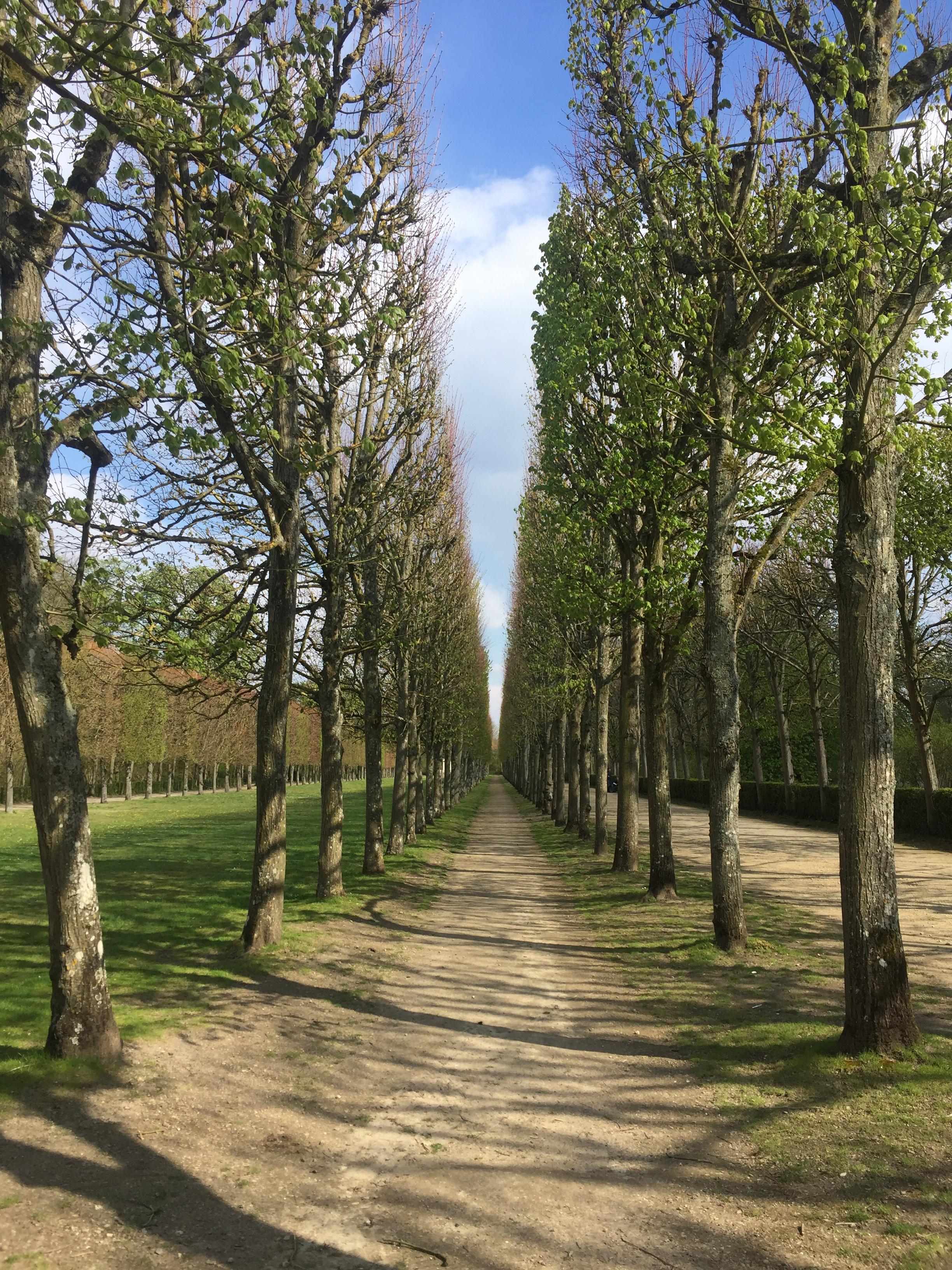 Compiègne Forest