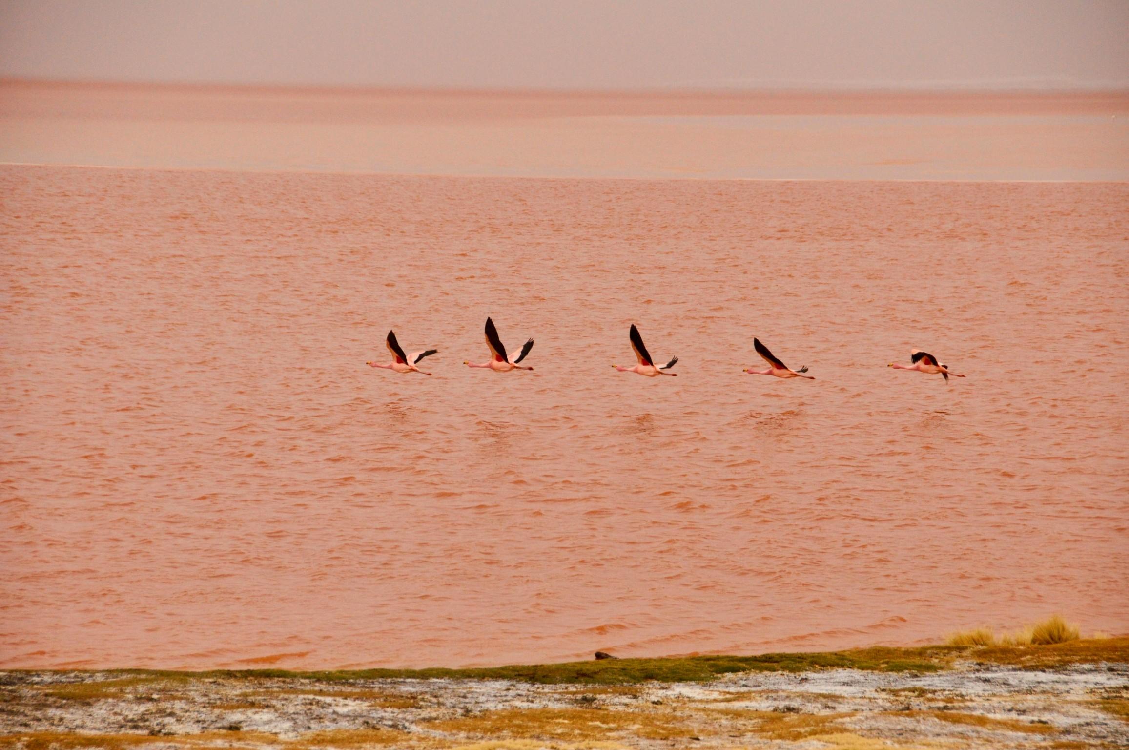 Salar de Uyuni Red Lagoon